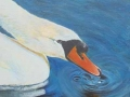 """Swan"" by Anne-Marie Marshall"